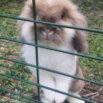 Pepe alla pensione estiva per conigli di Addestrare Conigli