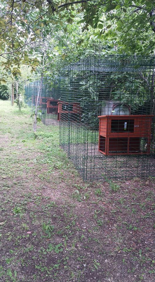 Le strutture della pensione estiva di Addestrare Conigli