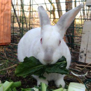 Ettore, coniglio ospite al Santuario di Yogurt e Romy a Botticino