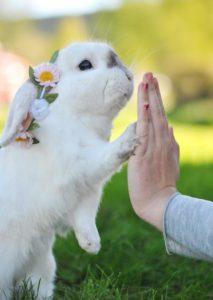 batti cinque con coniglio