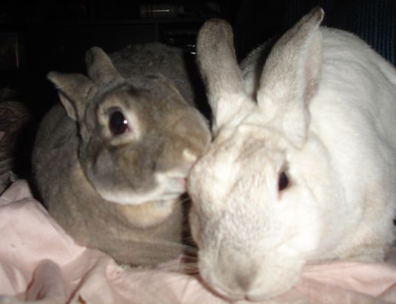 perché il mio coniglio ha perso peso