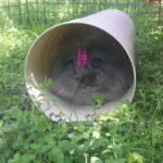 Billa nel tunnel alla pensione estiva di Addestrare Conigli