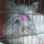 Billa coniglia nella casetta alla pensione estiva di Addestrare Conigli