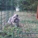 Leo nell'erba alla pensione estiva di Addestrare Conigli