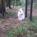 Ice coniglio nel recinto alla pensione estiva di Addestrare Conigli