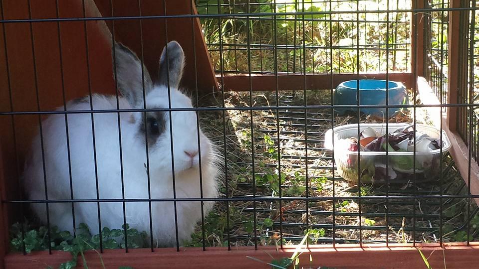 Donnie coniglia nella conigliera alla pensione estiva di Addestrare Conigli