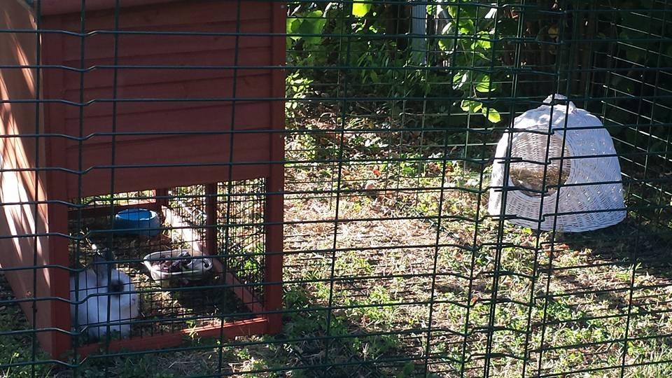 Donatella alla pensione estiva per conigli di Addestrare Conigli