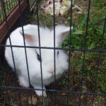 Ice alla pensione estiva di Addestrare Conigli