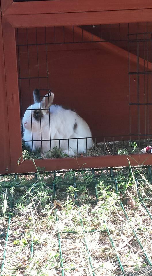 Donnie alla pensione estiva per conigli di Addestrare Conigli