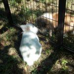 Ice e Pepe alla pensione estiva per conigli di Addestrare Conigli