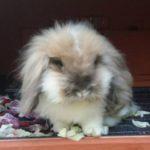 Pepe nella sua conigliera alla pensione estiva per conigli di Addestrare Conigli