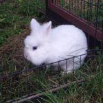 Ice alla pensione estiva per conigli di Addestrare Conigli
